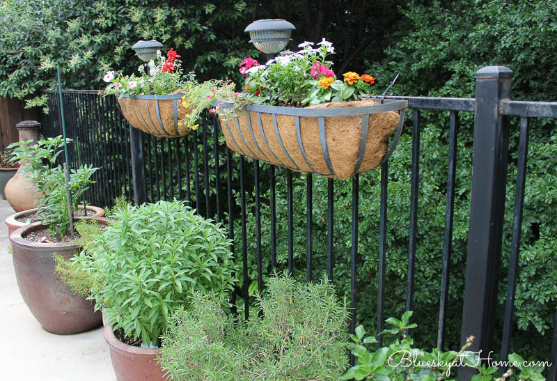 flowers in hayracks with potted herbs