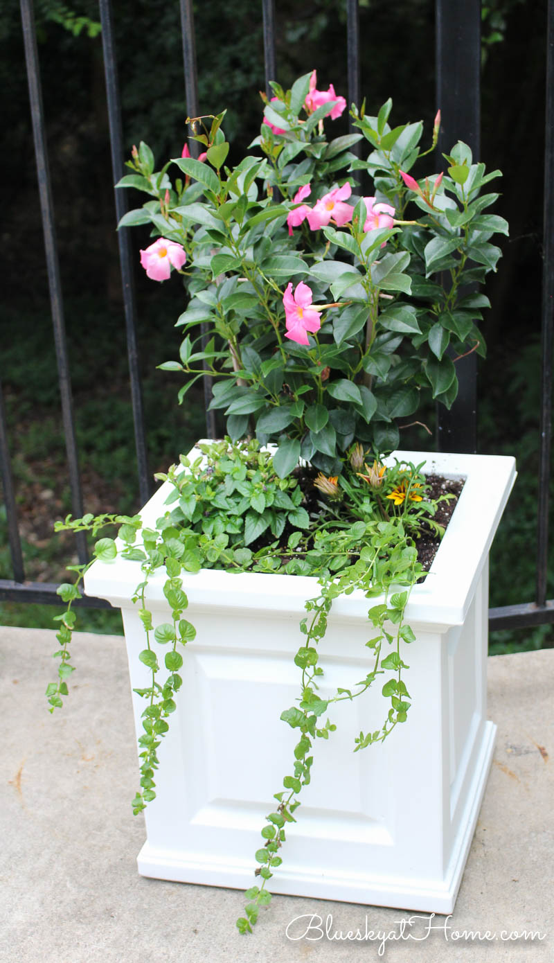 flowers in white planter