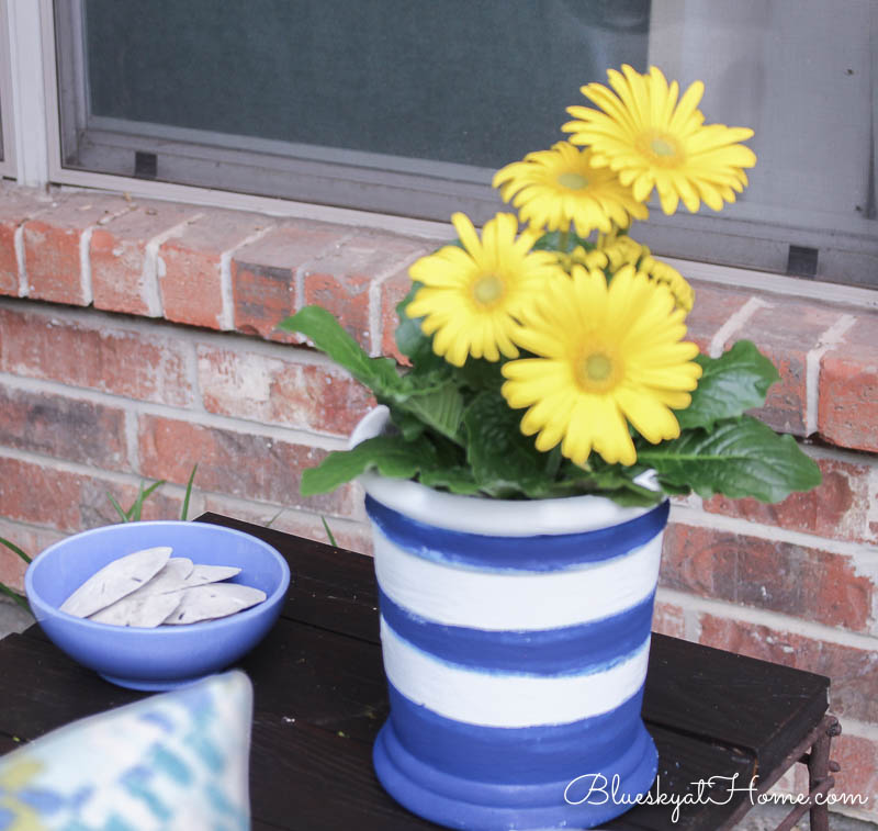 yellow Gerber daisies in blue and white planter