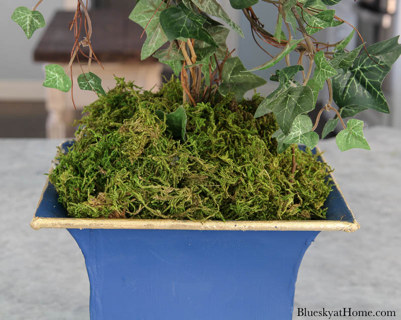 green moss in painted container