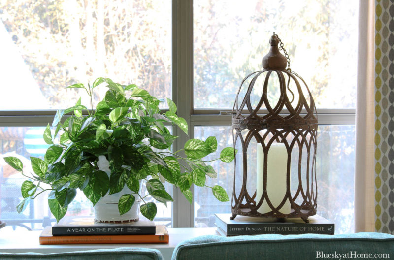 green pothos ivy in white container