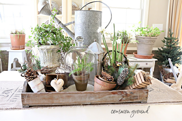 winter plants and clay pots