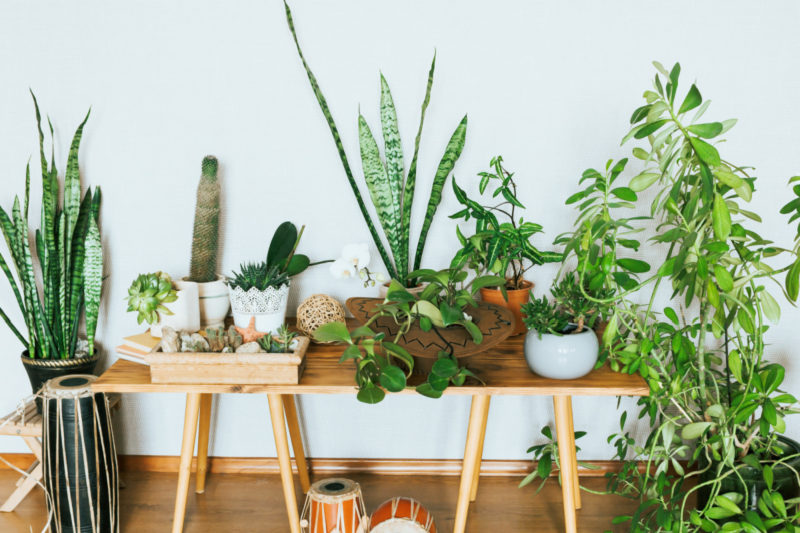 house plants in 2021 home decor