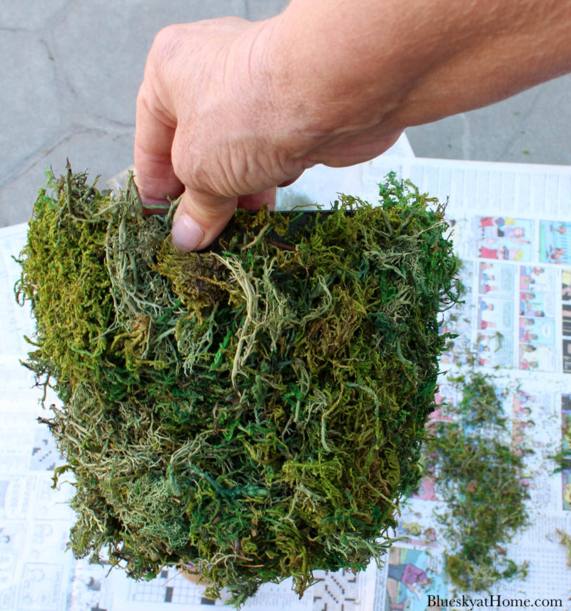 green plastic container covered in moss