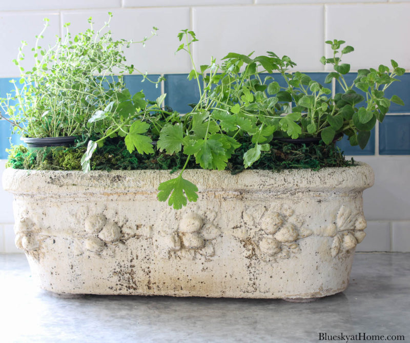 herbs in stone container
