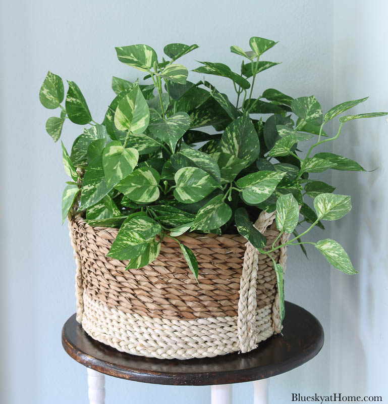 green plant in basket