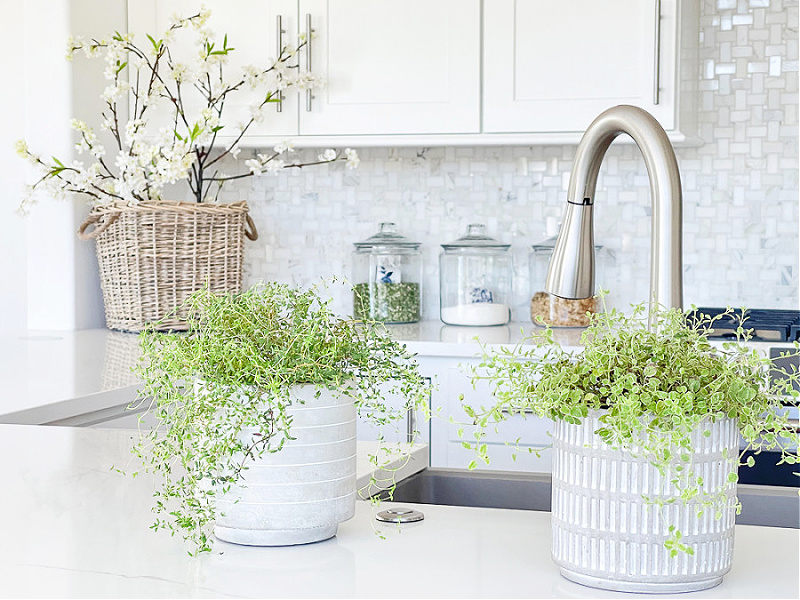 kitchen counter with green plants