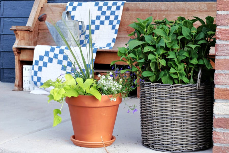 clay pot and woven basket with plants