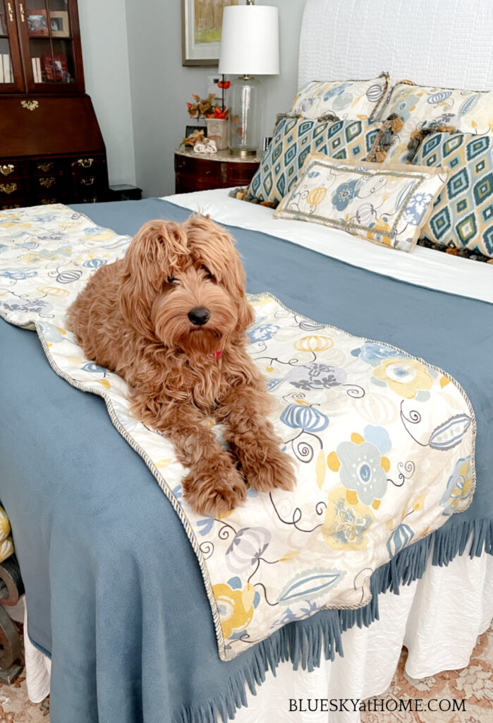 apricot labradoodle on fall bed